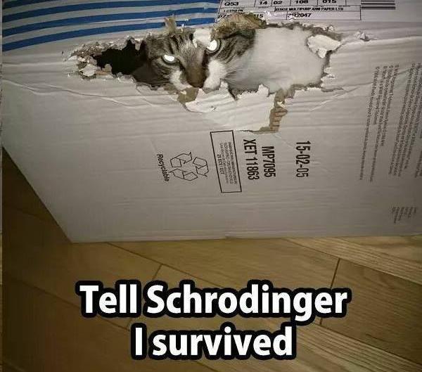 Tell Schrodinger I Survived Photo of Cat